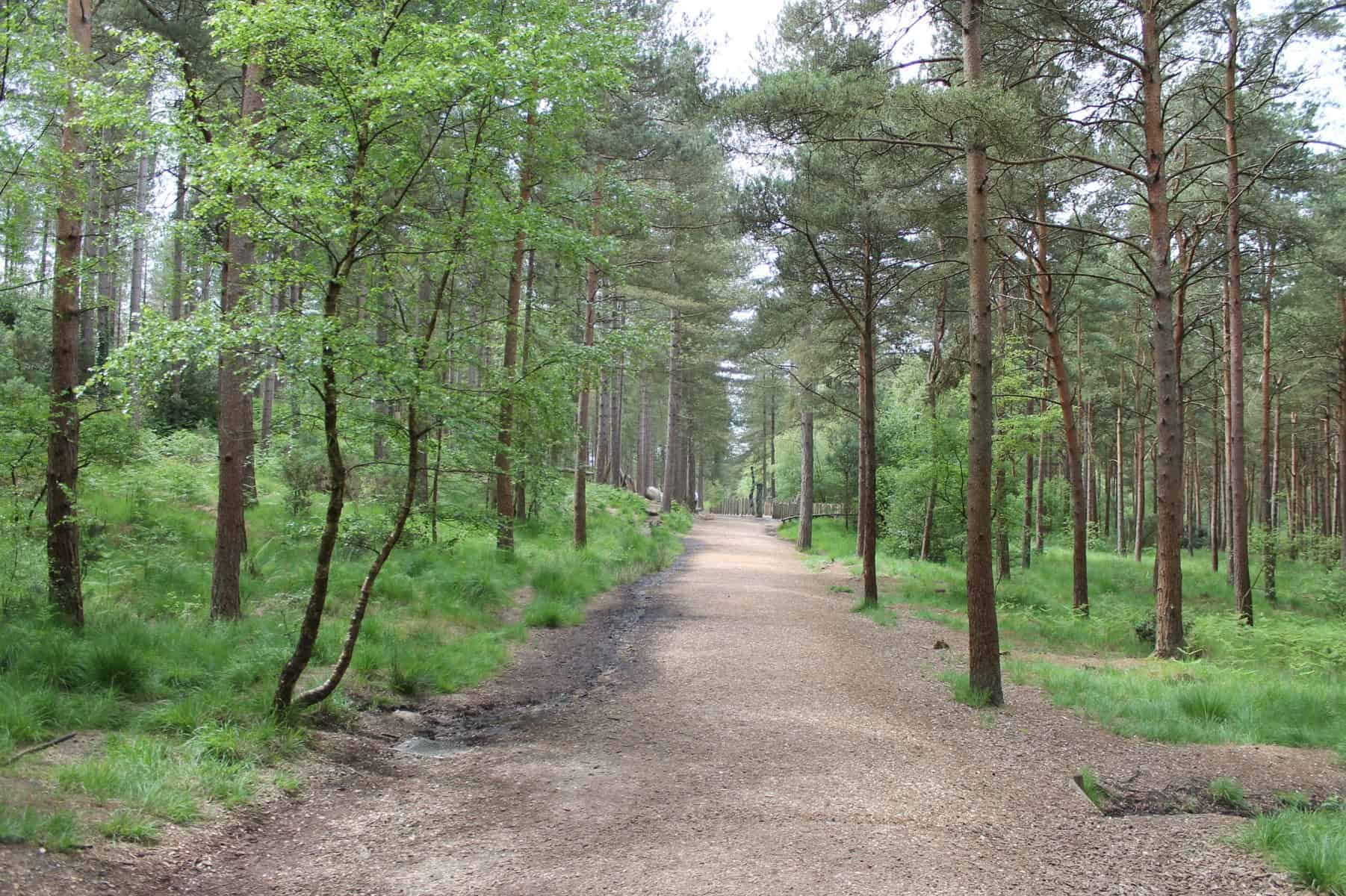 A Day at Moors Valley Country Park Review