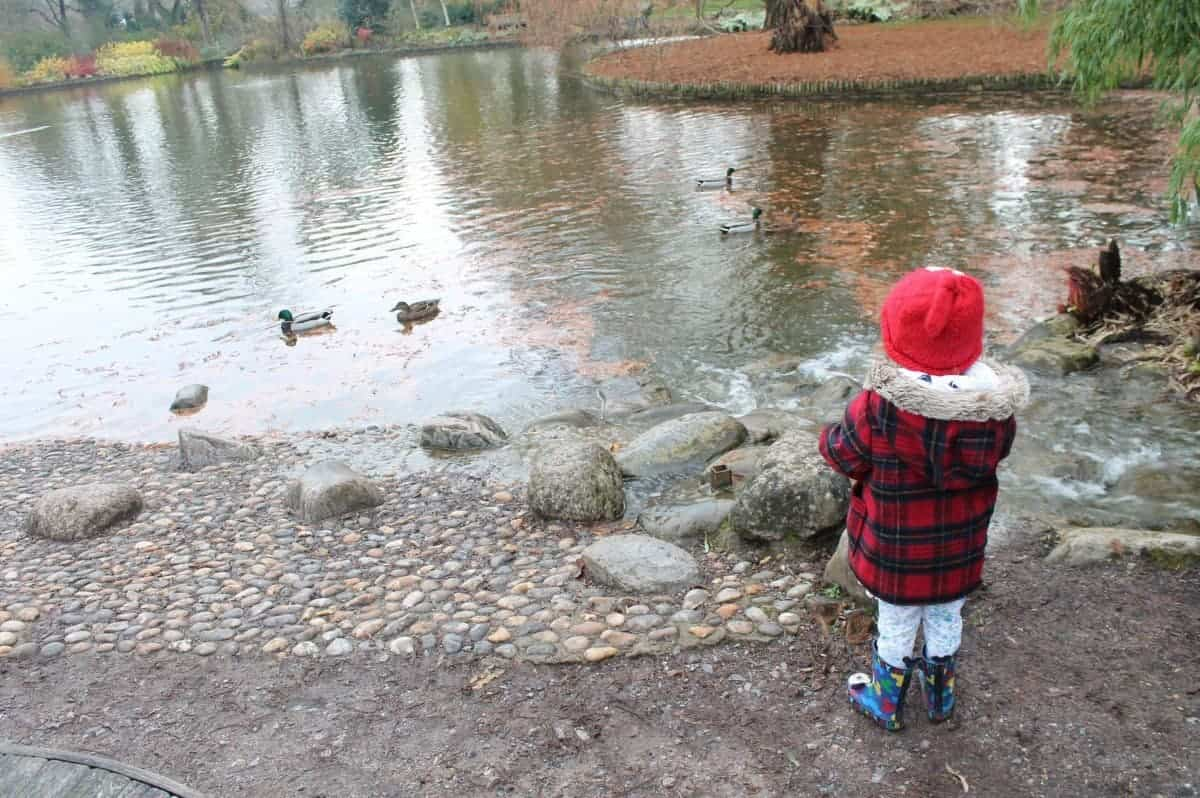 Feeding Ducks {The Ordinary Moments}