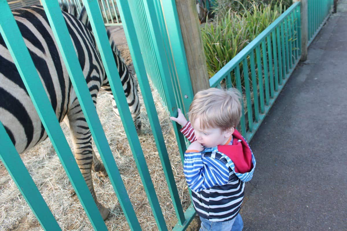 Review: Paradise Wildlife Park