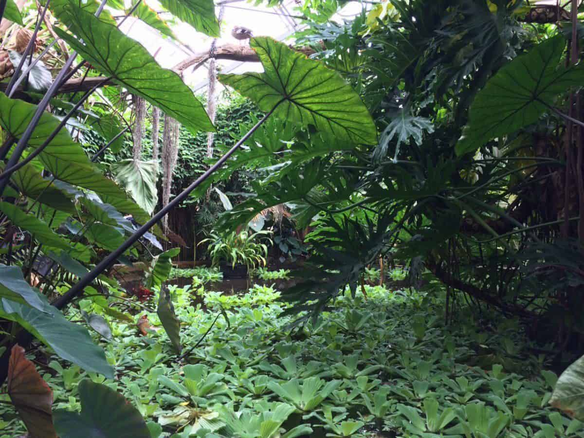 The Living Rainforest - Newbury