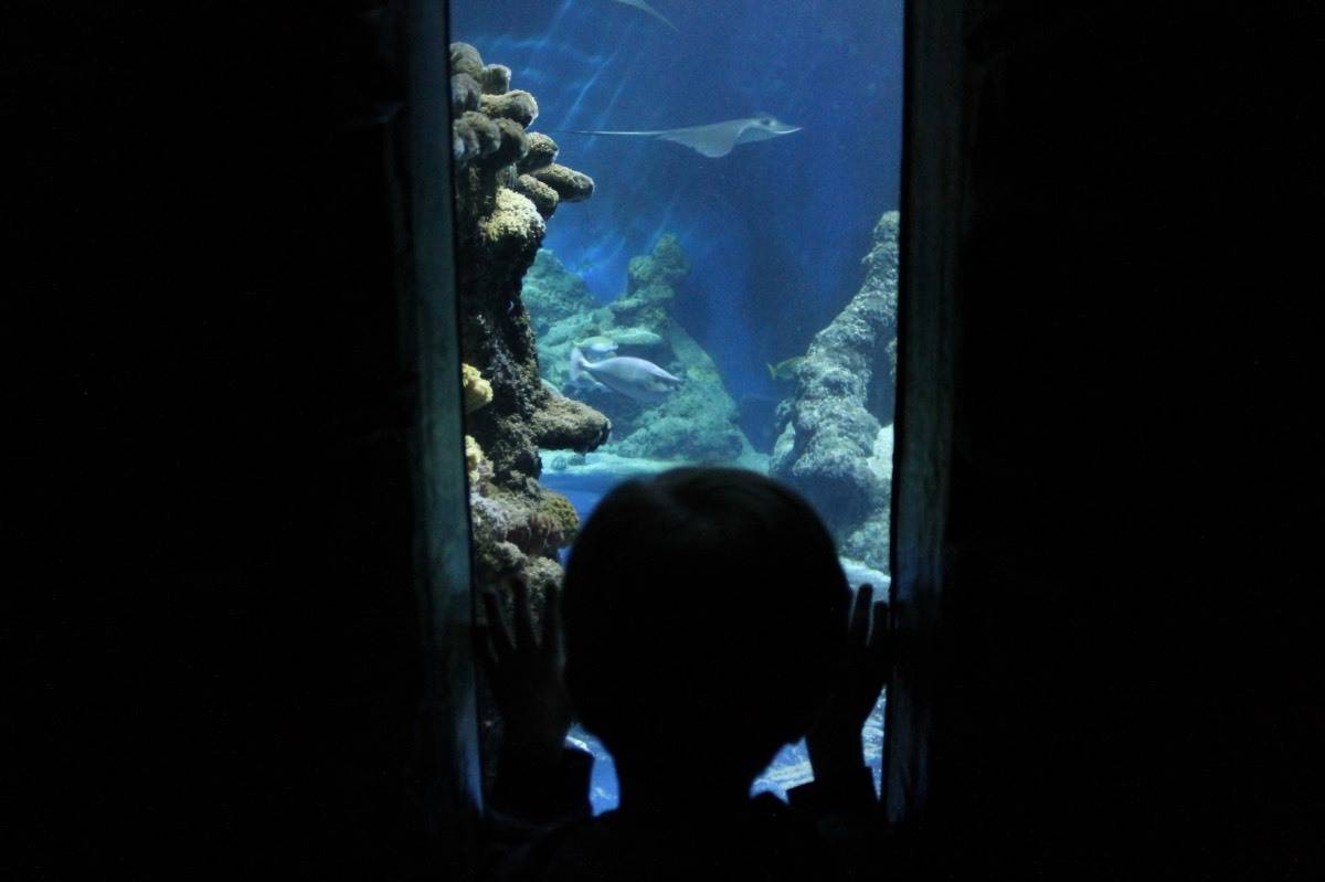 Review: Sea Life London Aquarium