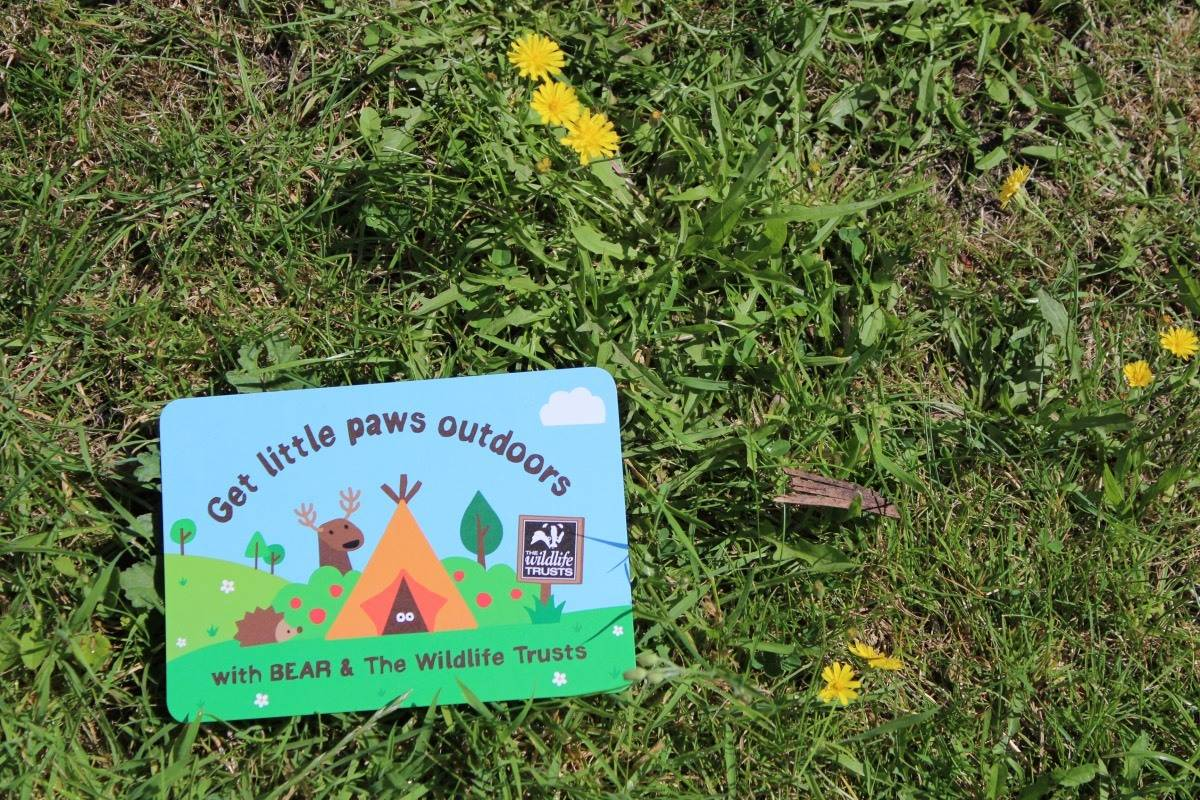 Getting Outside with BEAR and The Wildlife Trusts