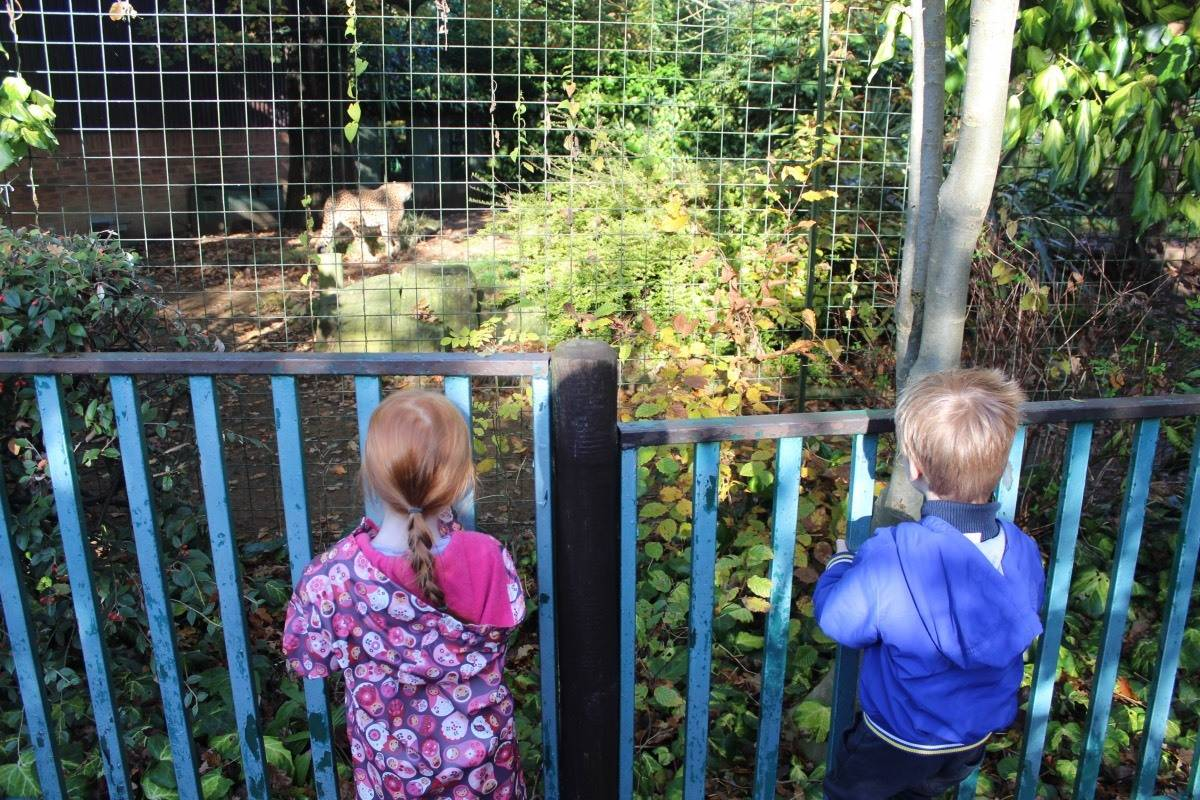 A Day Out at Paradise Wildlife Park