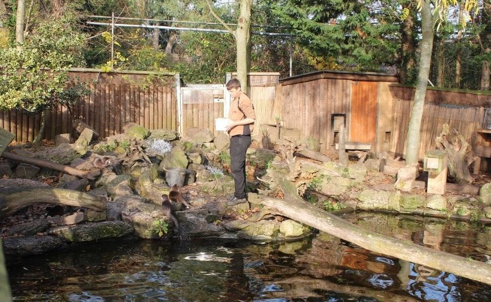 A Winter's Tale at Chessington World of Adventures - Otter Feeding