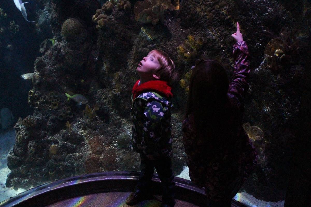 A Winter's Tale at Chessington World of Adventures - Sea Life