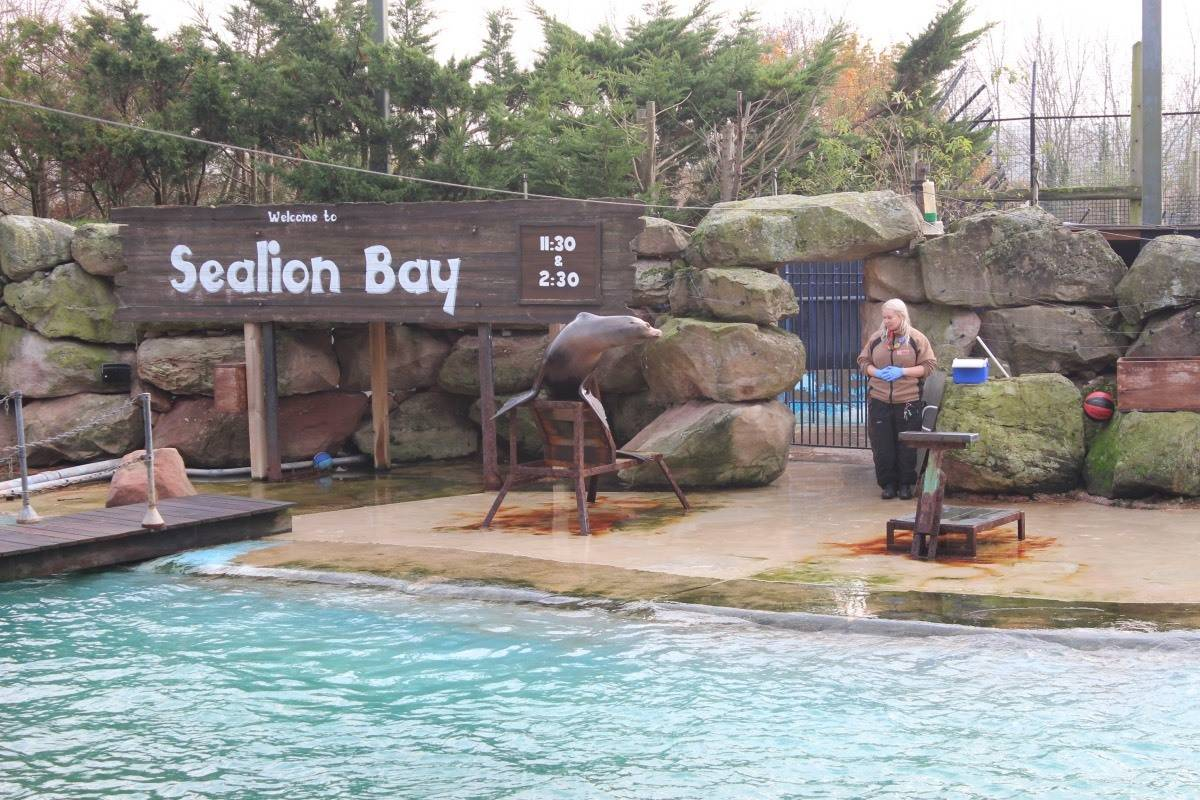 A Winter's Tale at Chessington World of Adventures - Sea Lion Show