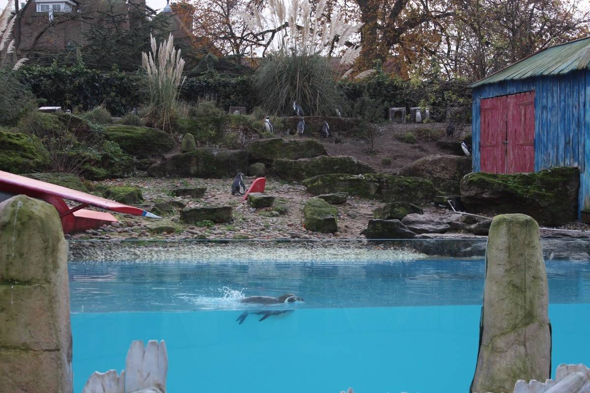 A Winter's Tale at Chessington World of Adventures - Penguins