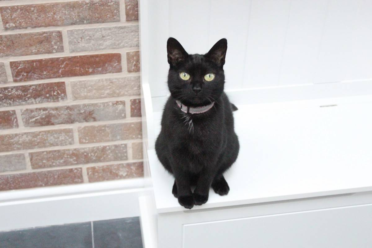 Understanding Our Cat's Behaviour with Lily's Kitchen - and Giveaway!