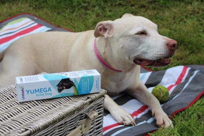 Take your dog on a Pupnic with YuMEGA