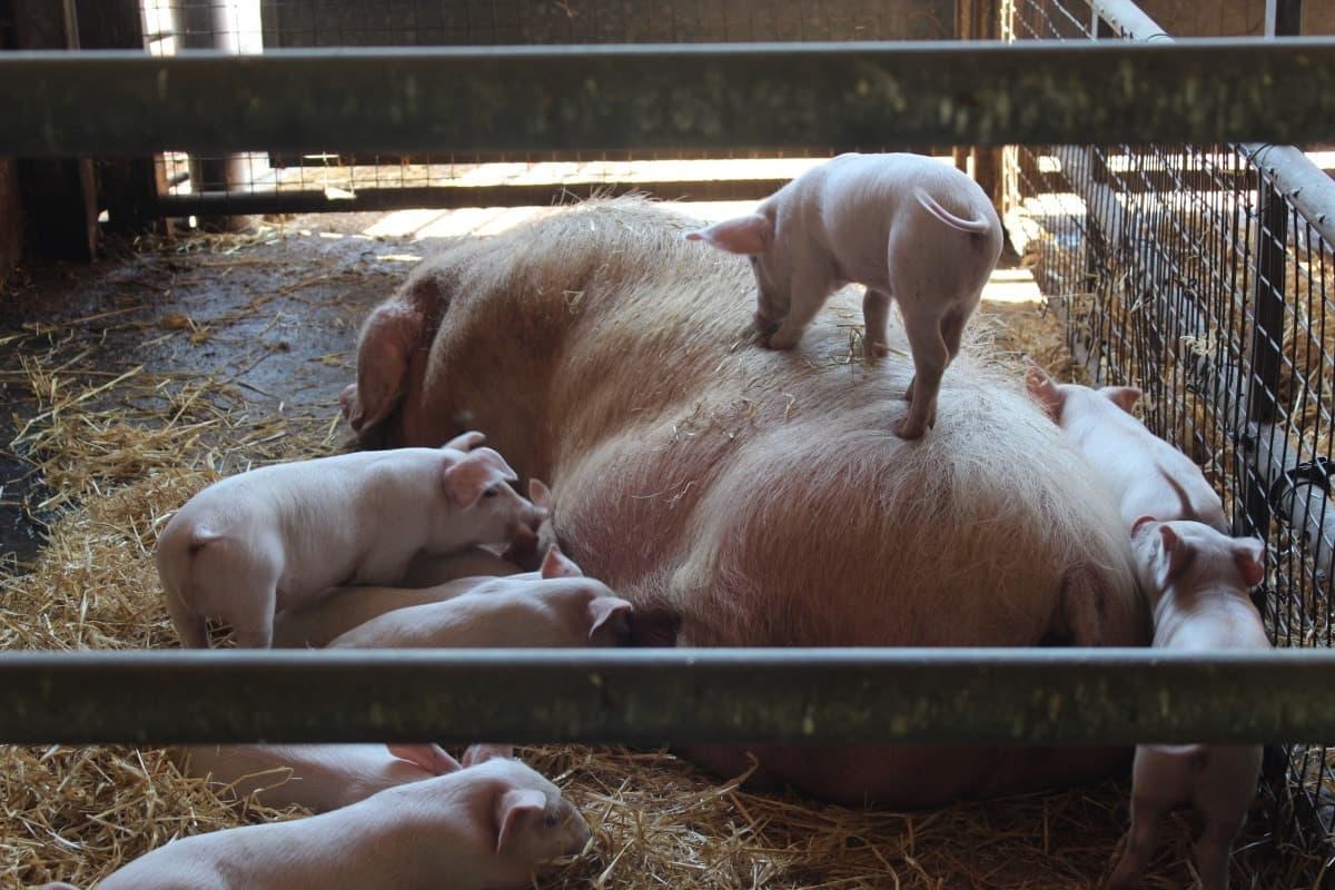 A Morning at Longdown Activity Farm