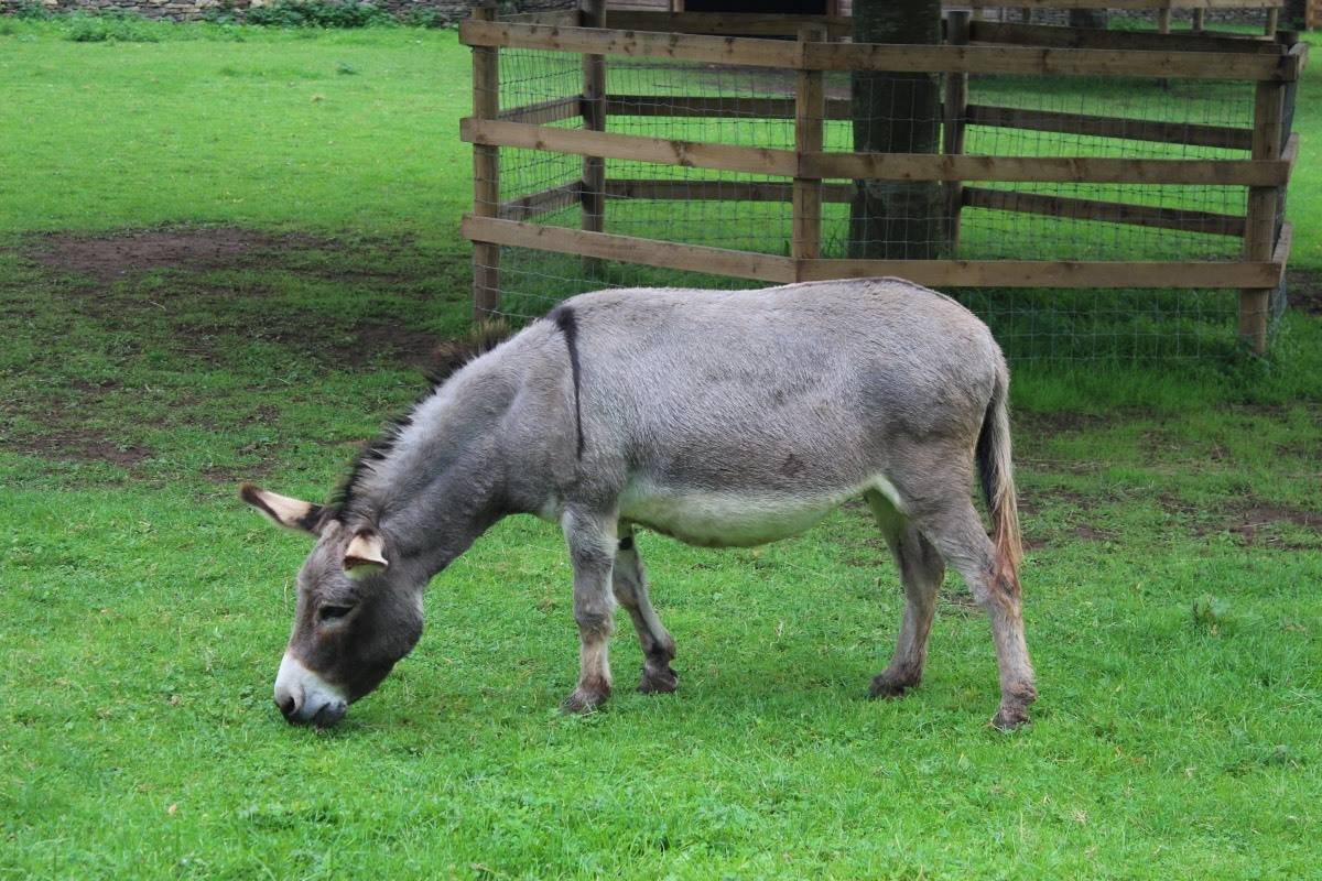 A Day at Cotswold Wildlife Park and Gardens