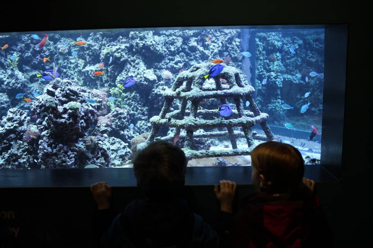 10 Things to do at Sea Life Brighton