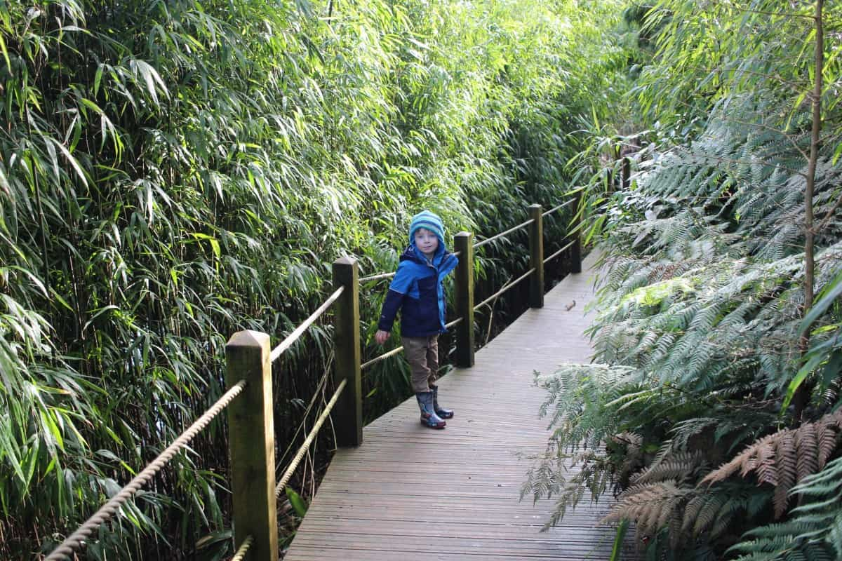 A Morning at the Lost Gardens of Heligan