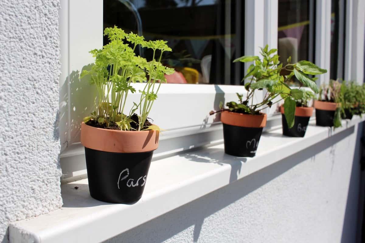 A Garden Update with wilko