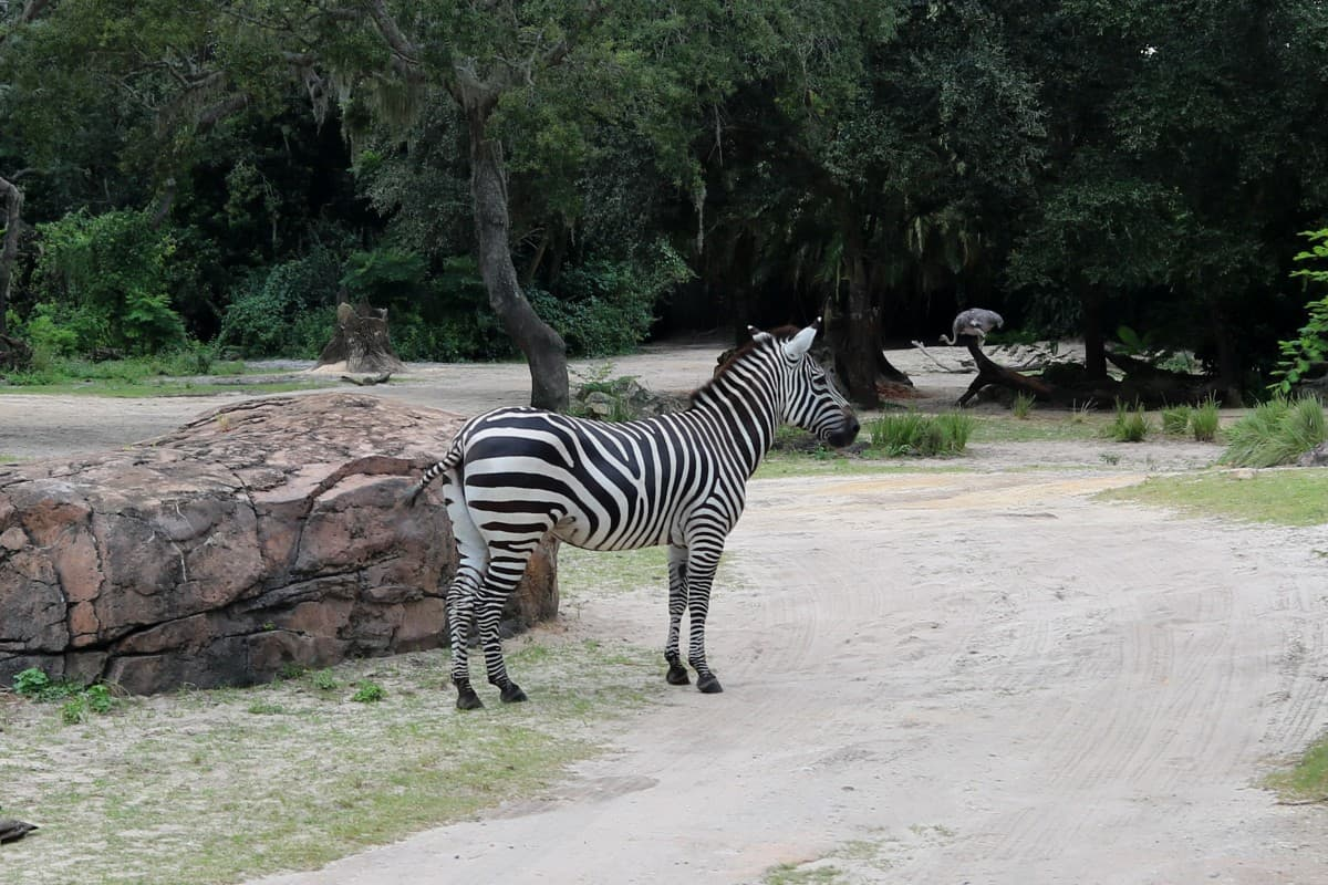 Our Day at Disney's Animal Kingdom Theme Park
