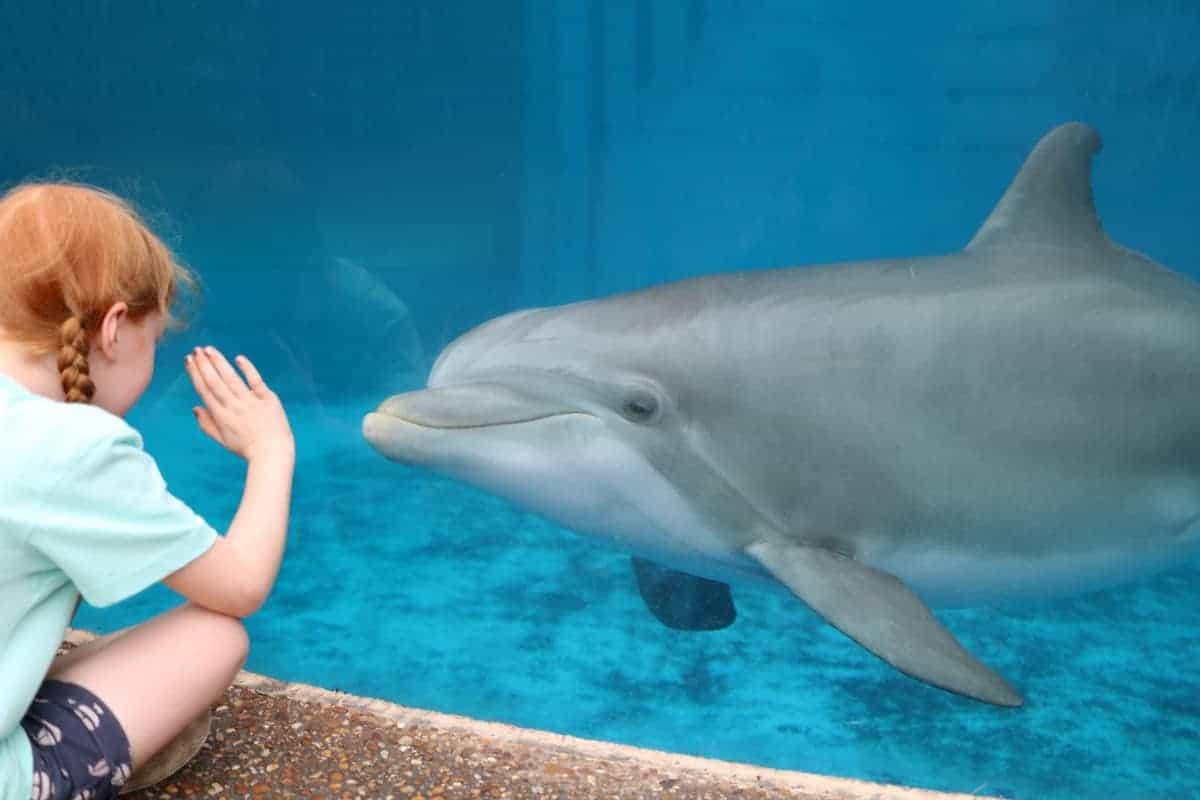 A Family Visit to SeaWorld, Florida