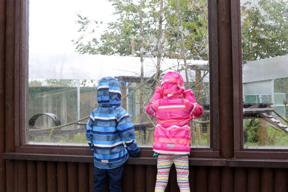 A Rainy Day at Monkey World