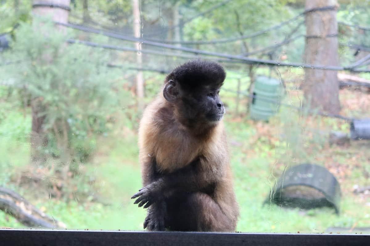A Rainy Day at Monkey World