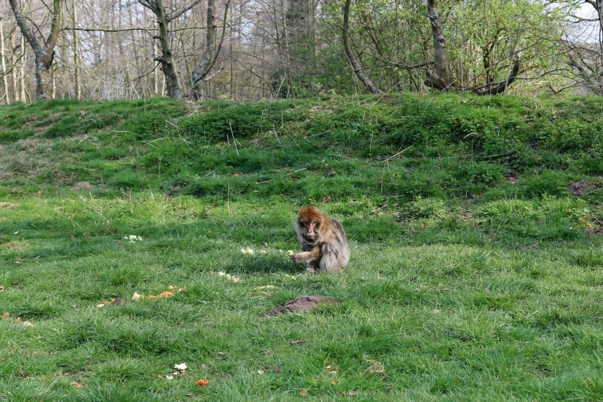 Trentham Monkey Forest Review