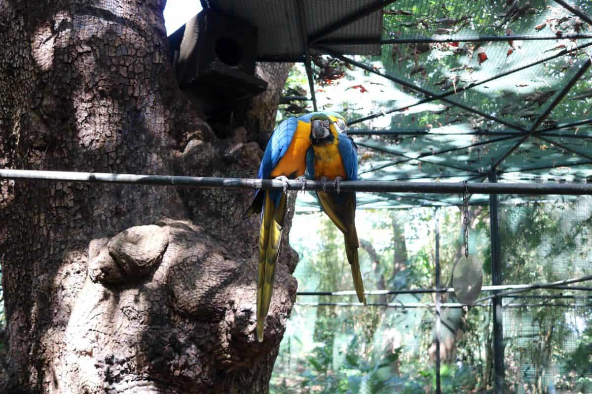 A Day at Casela World of Adventures - Mauritius parrots