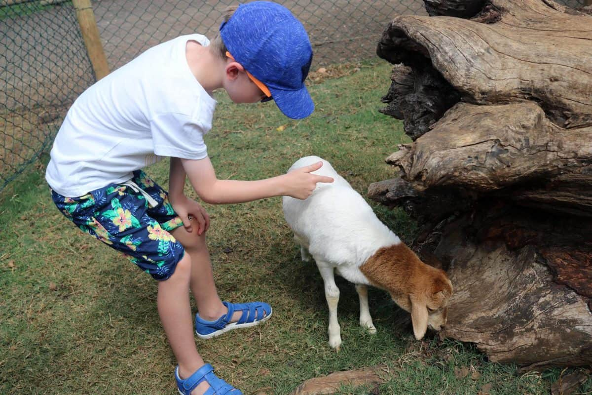 A Day at Casela World of Adventures - Mauritius baby goat