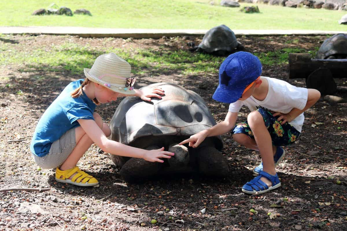 A Day at Casela World of Adventures - Mauritius giant tortoise