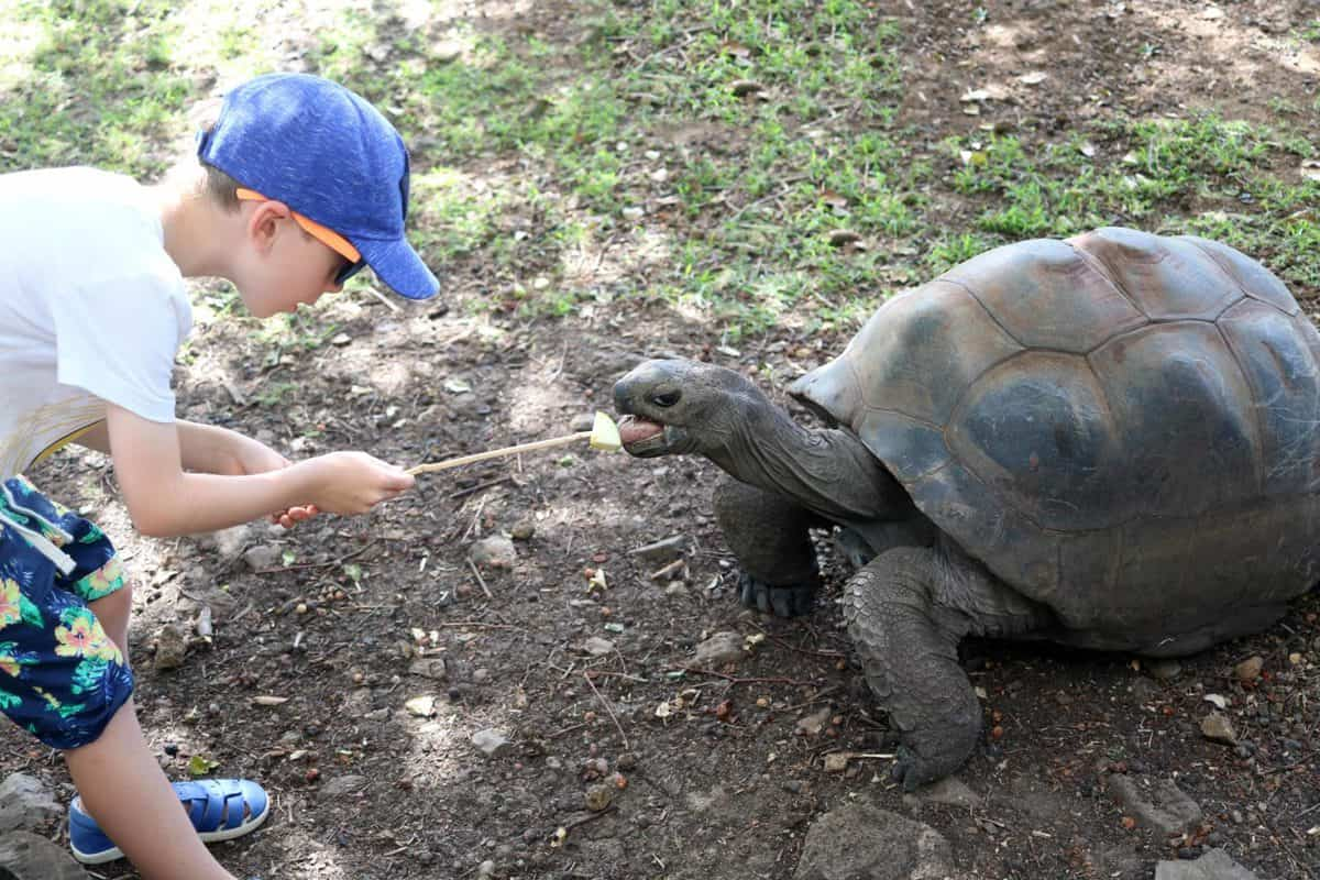A Day at Casela World of Adventures - Mauritius feeding giant tortoise