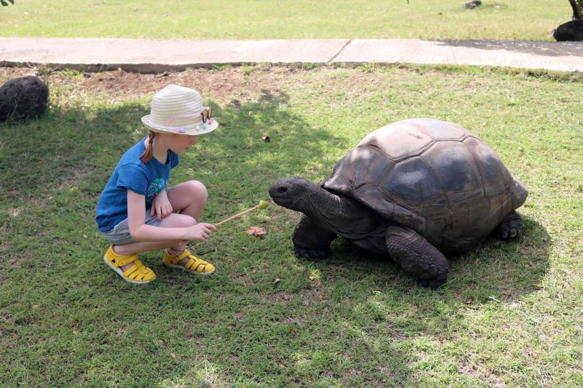 A Day at Casela World of Adventures - Mauritius tortoise