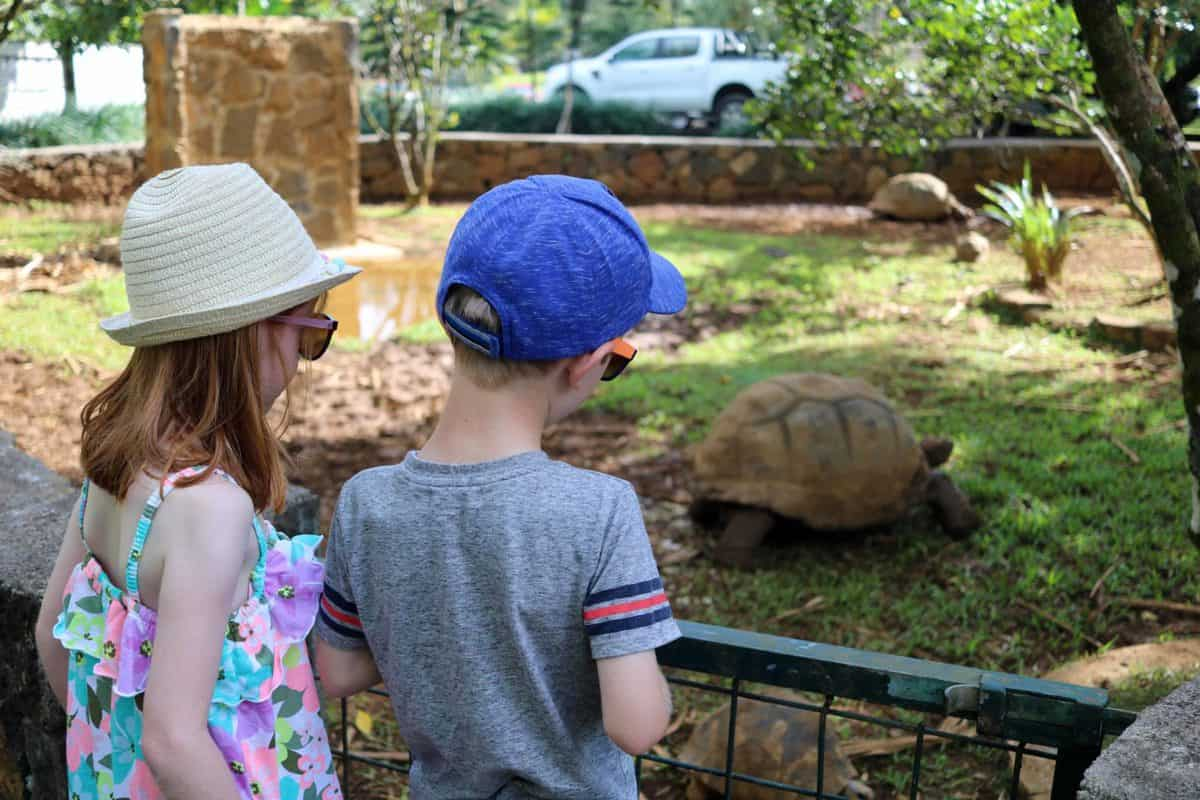 A Morning at TerrOcean Le Domaine de l'Etoile Mauritius - Tortoises