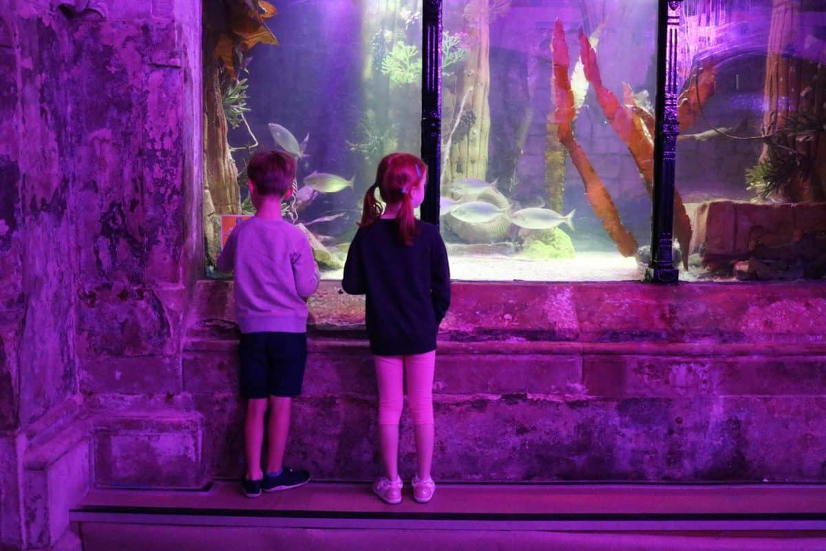 Pirates and Mermaids at Sea Life Brighton | AD