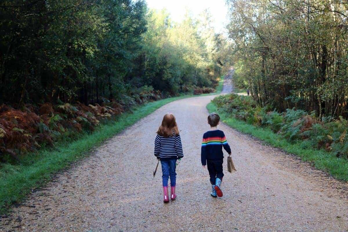 Alice Holt Forest - Farnham