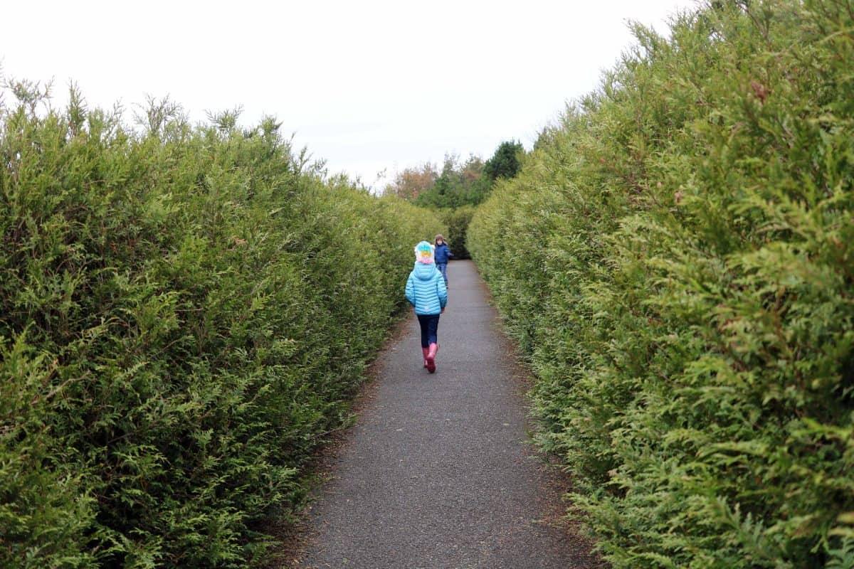 The Milky Way Adventure Park - Devon maze