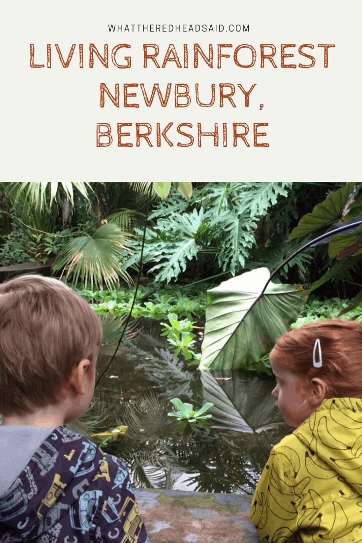 Living Rainforest Review - Newbury, Berkshire