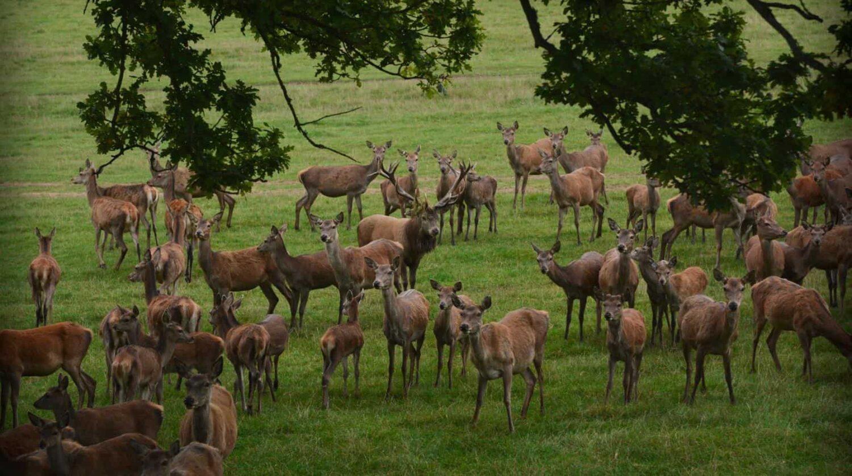 Bucklebury Farm & Deer Safari Park - Reading