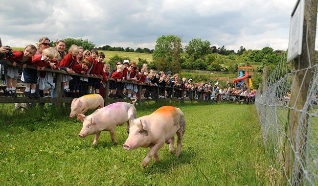 Bocketts Farm Park - Leatherhead