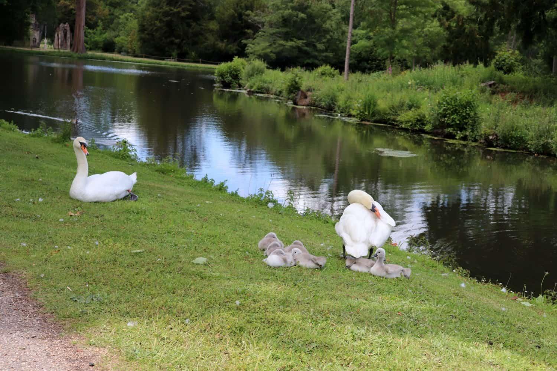 Visiting Painshill Park After Lockdown