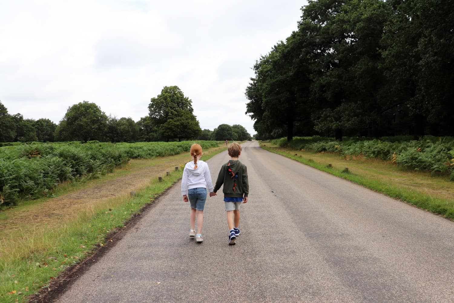 An Adventure to See Deer in Richmond Park, London