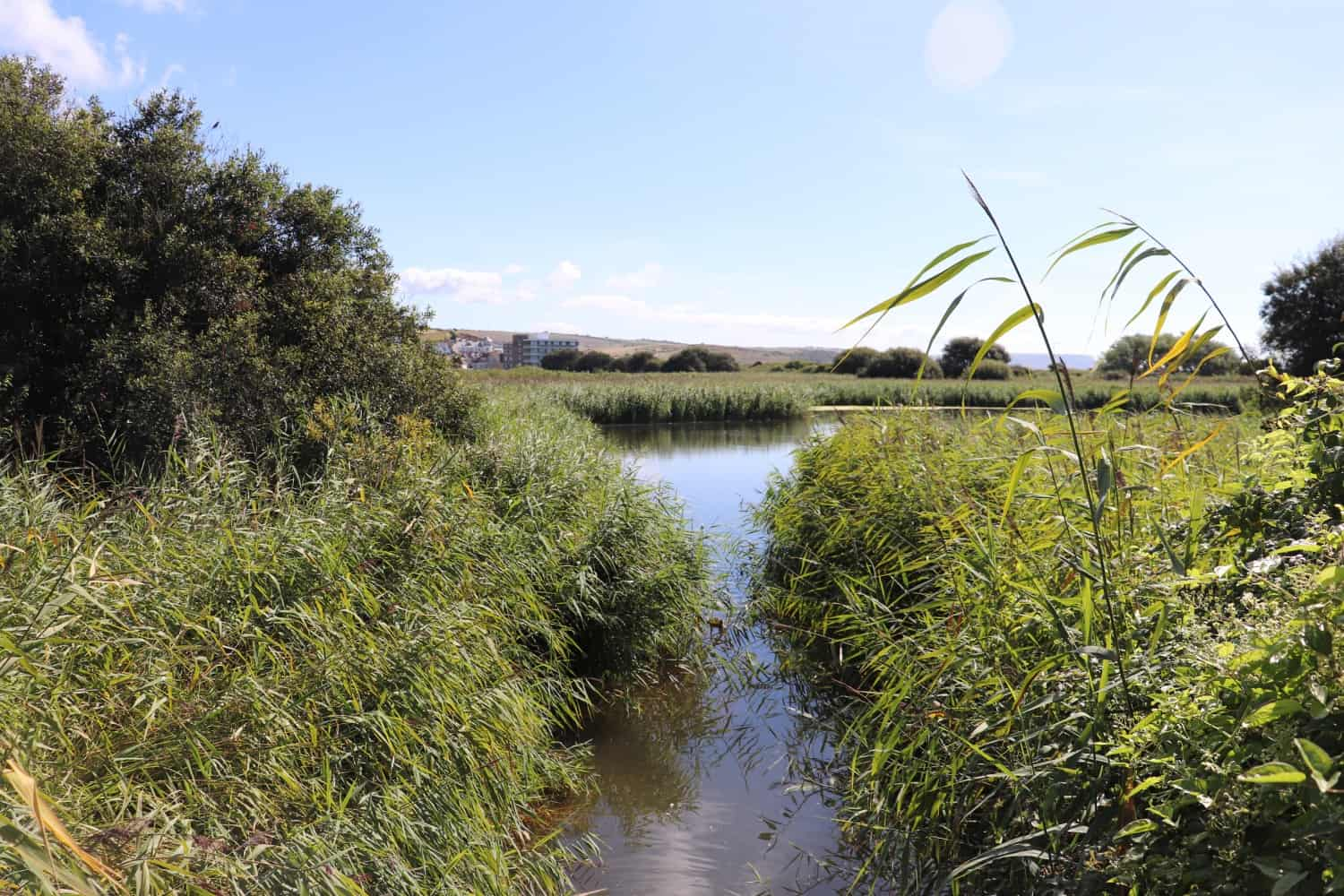 RSPB Lodmoor and Lodmoor Country Park