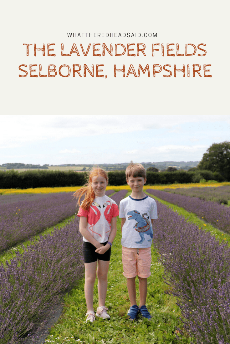 The Lavender Fields – Selborne, Hampshire